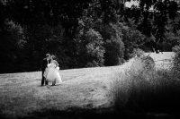 asheville farm wedding bride and groom portrait