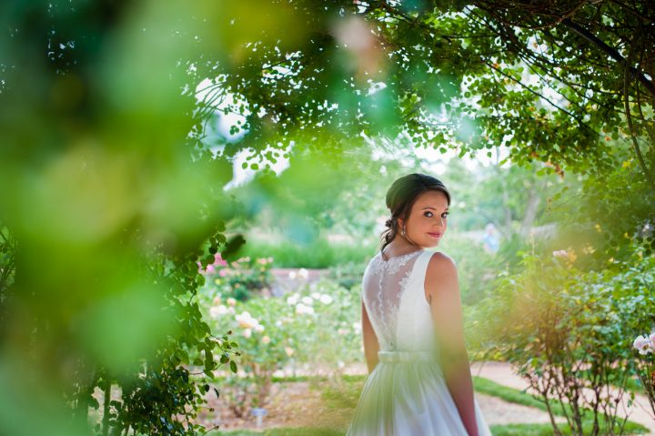 bridal portrait in the biltmore estate rose garden