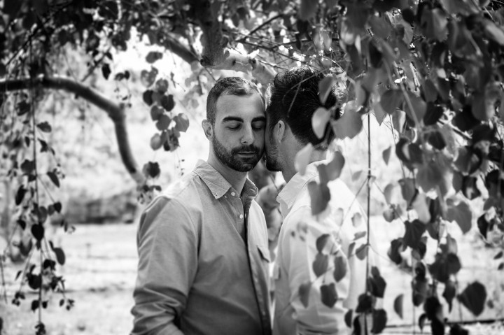 A black and white engagement session image from the Arnold Arboretum of two attractive men cheek to cheek under a tree