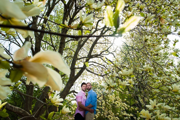 Seemingly small in the frame a same sex couple poses for a photograph surrounded by magnolia flowers during there Arnold Arboretum engagement session