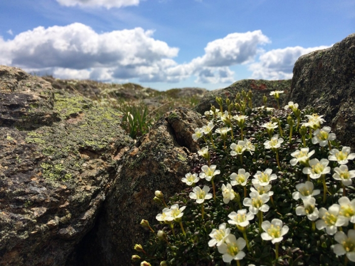 Spring time flouwers blooming on Mount Lafayette