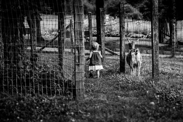 little girl with a goat walking away from the camera during her portrait session