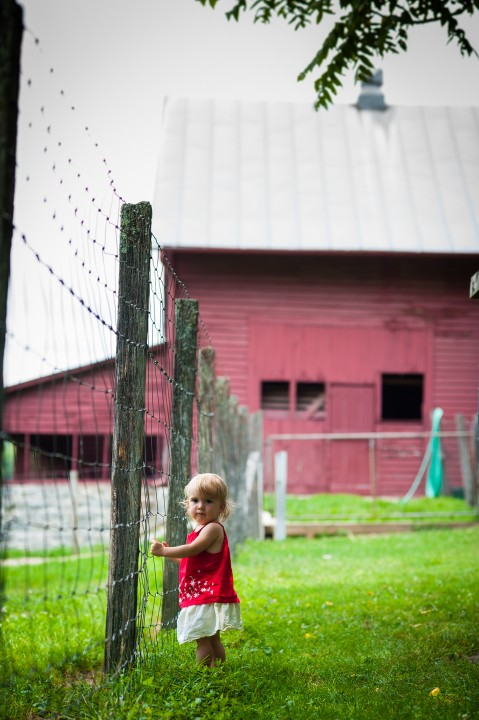 little girl waits for the goats to come visit during her portrait photography session