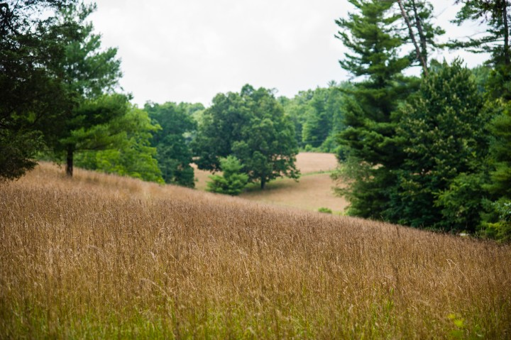 picture of the gorgeous fields at the Carl Sandburg home which is a perfect spot for wedding or family portraits