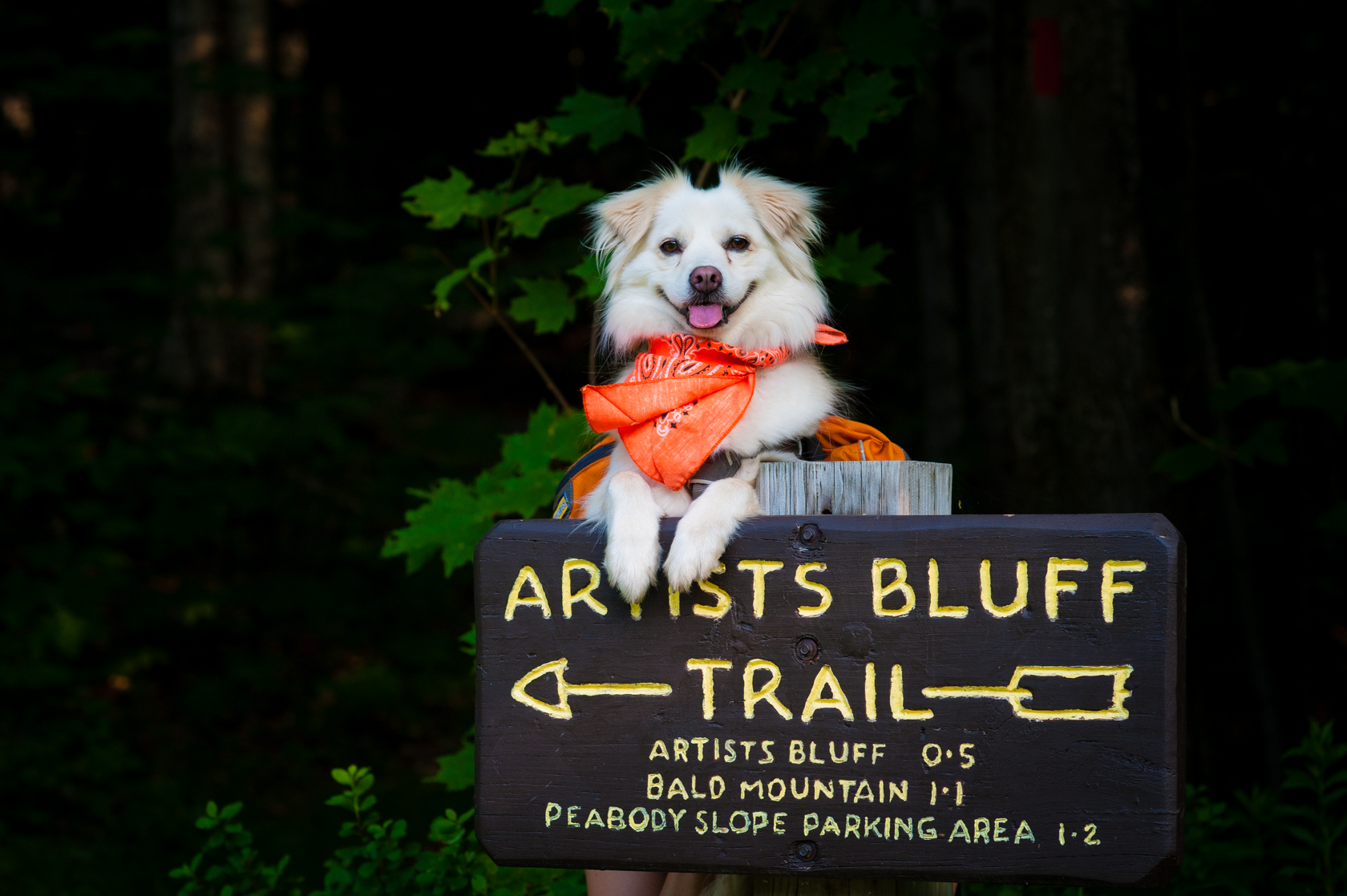 adventurous dog prepared for a mountain hike