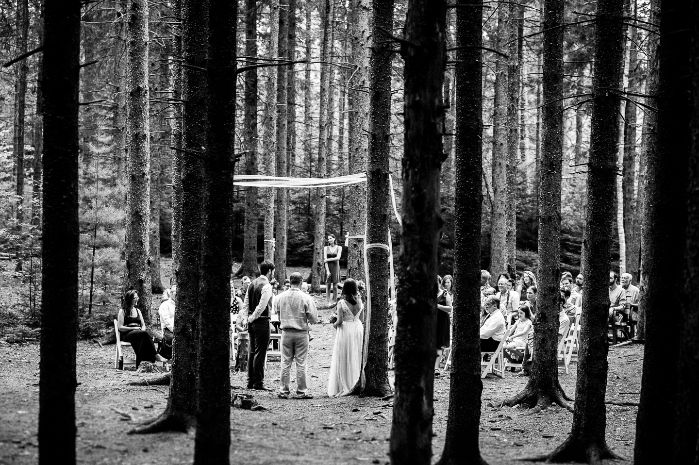 gorgeous old pine trees surrounded the wedding ceremony