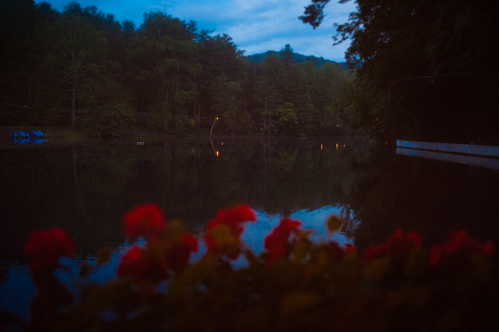 beautiful flowers line a gorgeous mountain lake at night