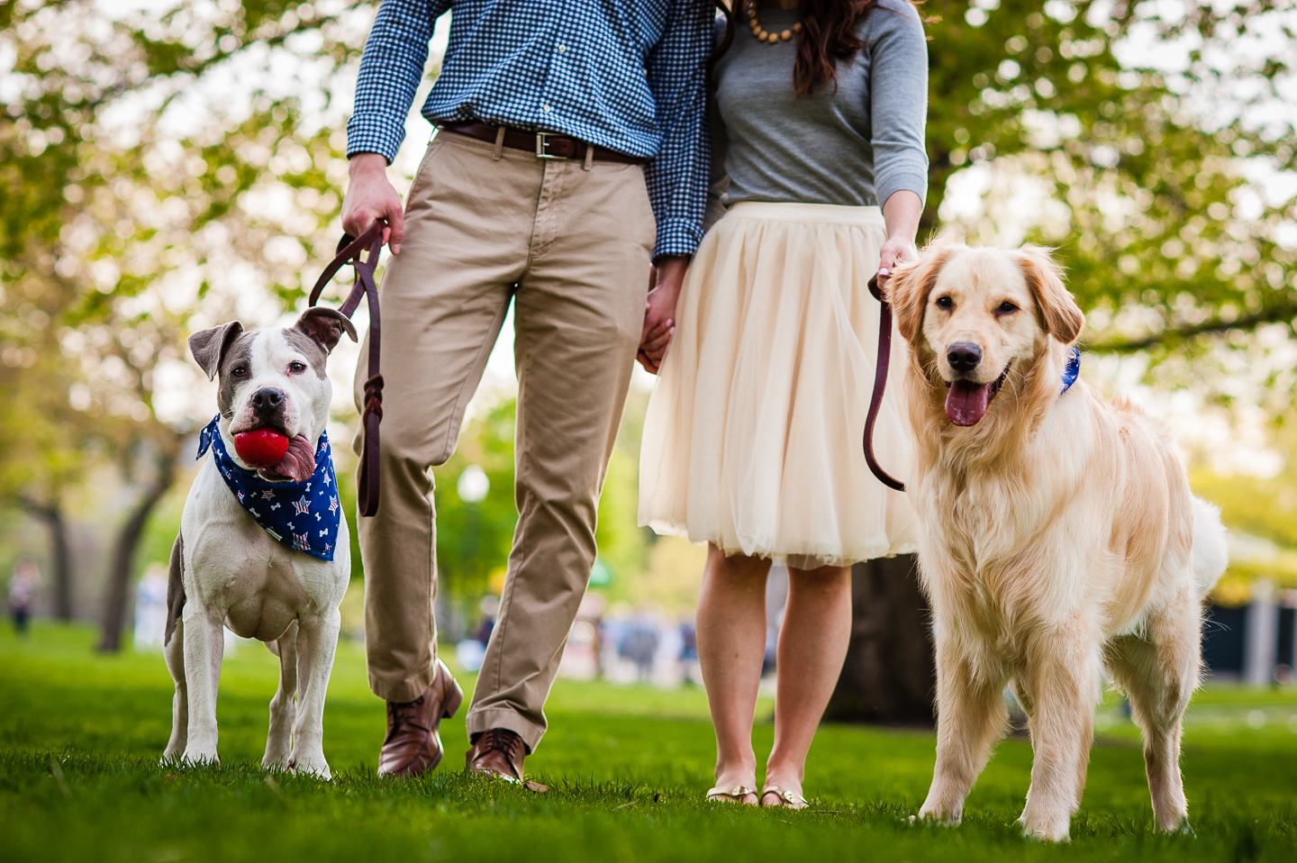 two dogs with owners during boston engagement session
