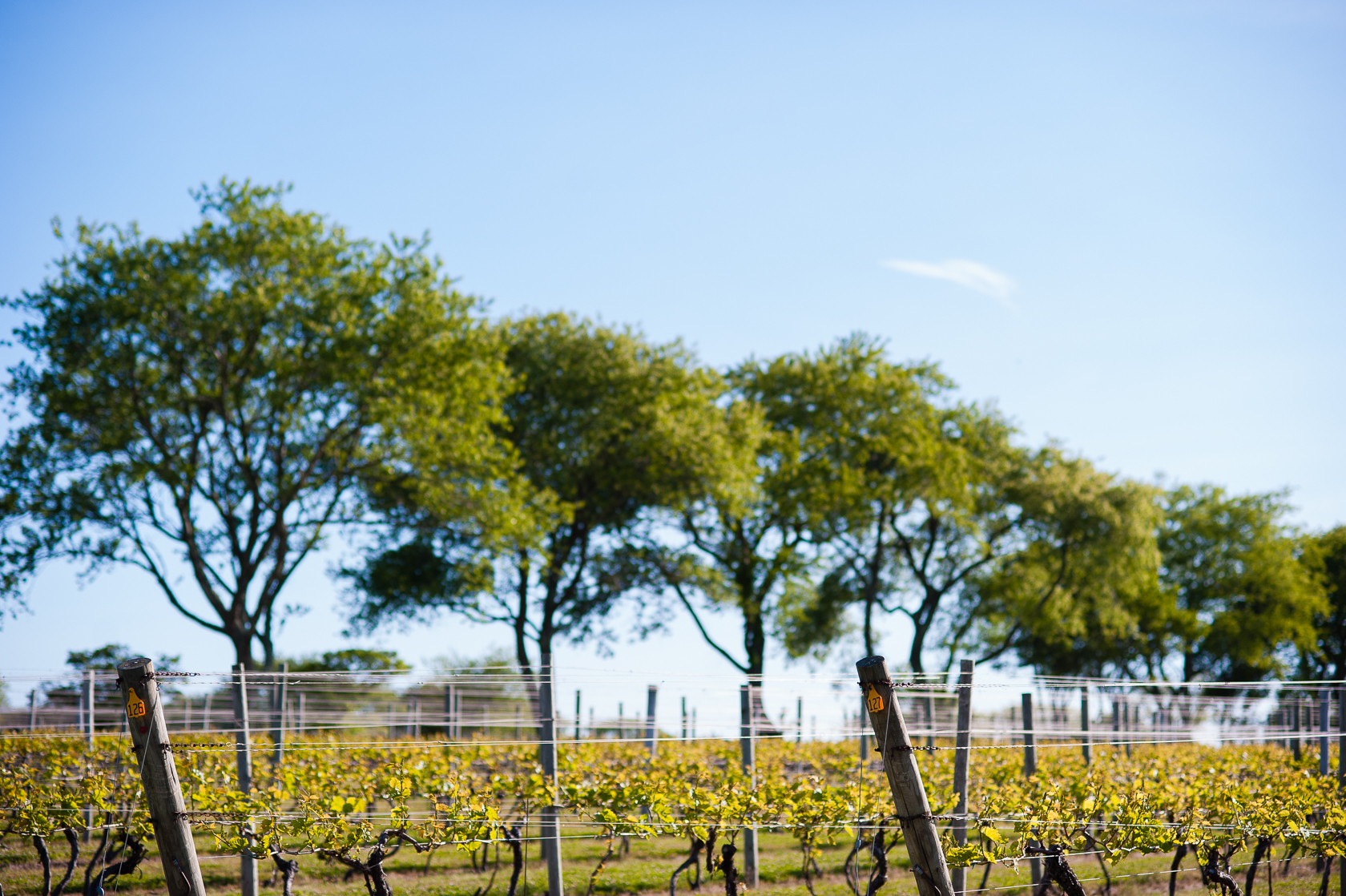 gorgeous vineyard was the setting for this summertime vineyard wedding
