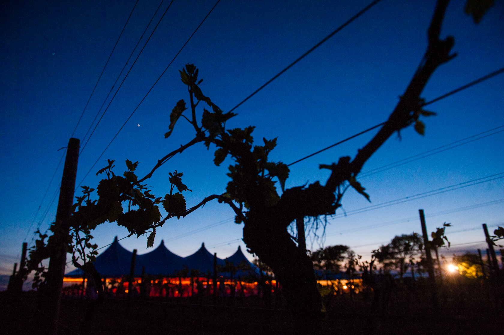 silhouette of  tented winery wedding