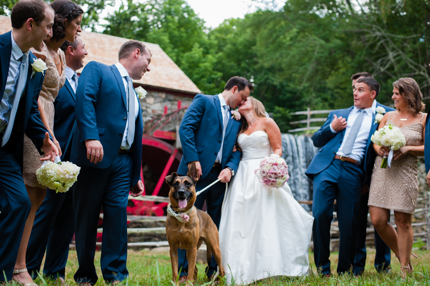 gorgeous german shepherd stole the show for this asheville wedding