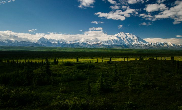 Denali wedding photographer