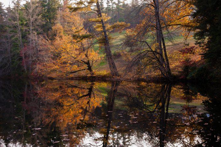 carl sandburg pond in flat rock nc during fall