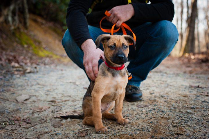 asheville dog adventure photographer