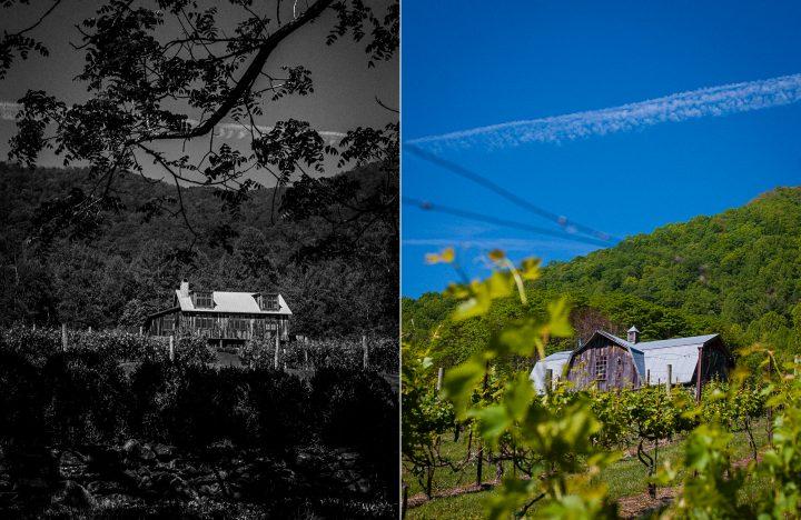 The beautiful Vineyards at Bettys Creek