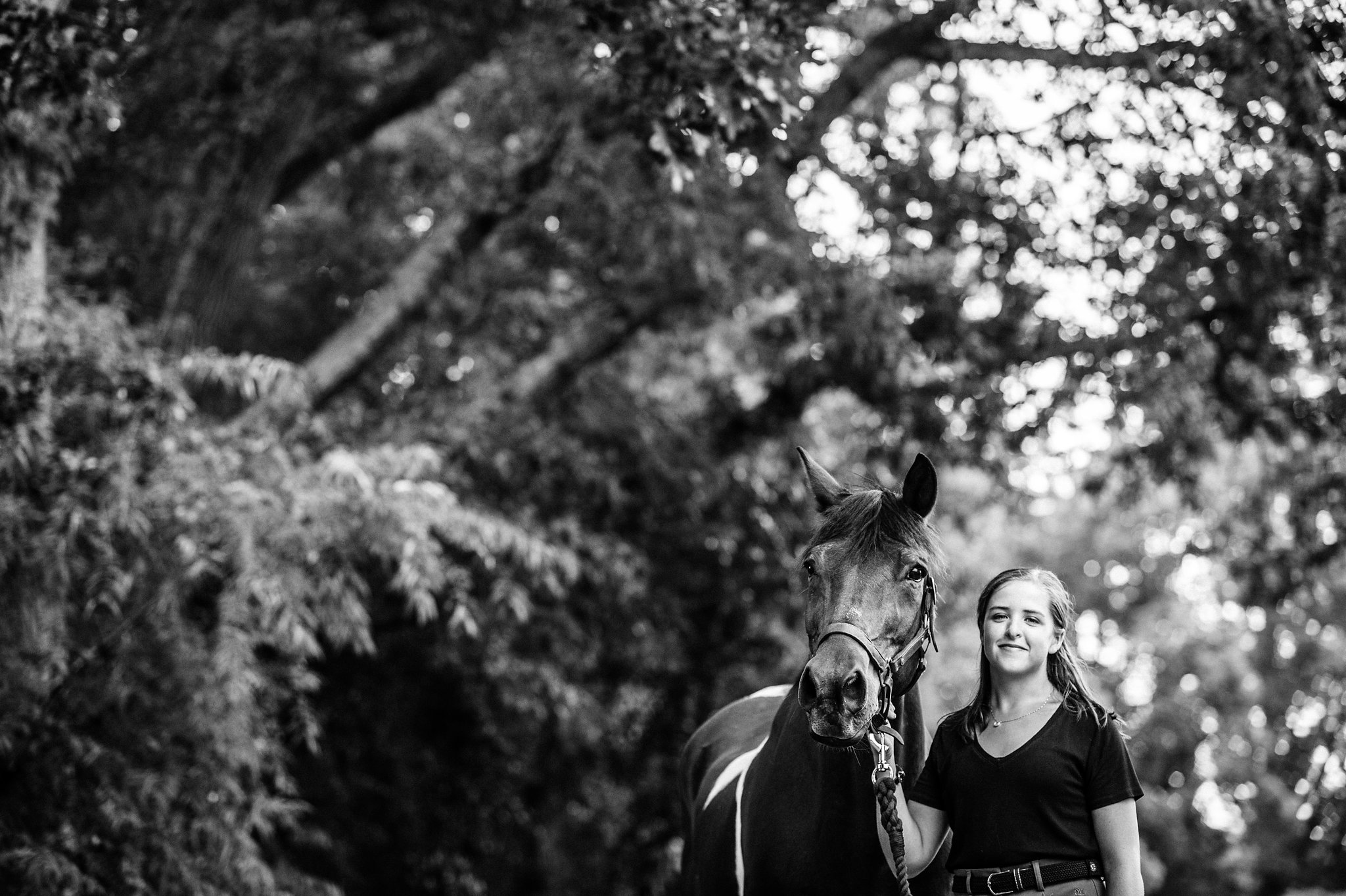 nc and tryon equine photograph on the farm