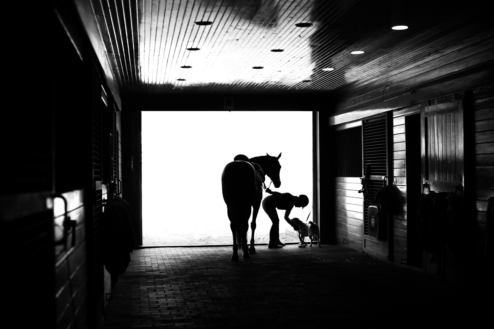 silhouette of horse and rider at a barn in Tryon NC