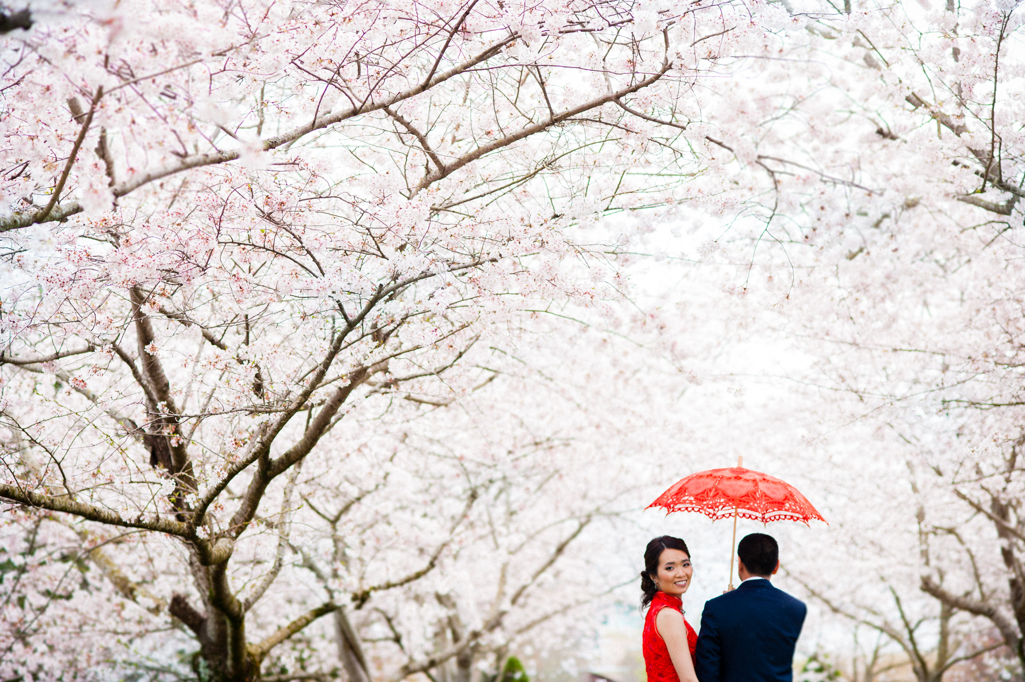 Chinese wedding portrait amongst cherry trees