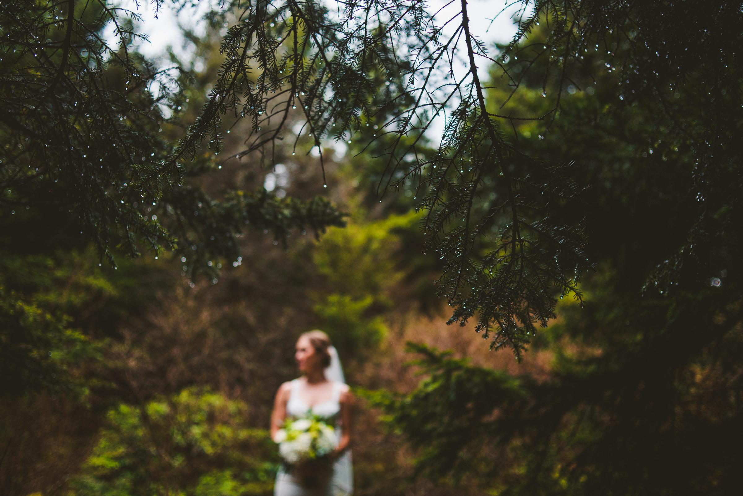 rain drops on a pine tree with an adventurous bride