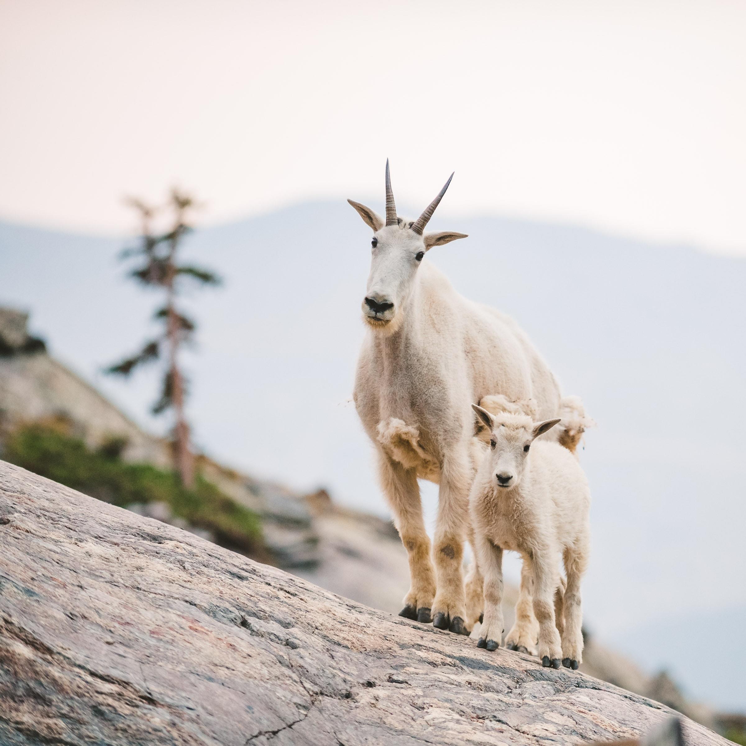 Alaskaelopementphotographer 46